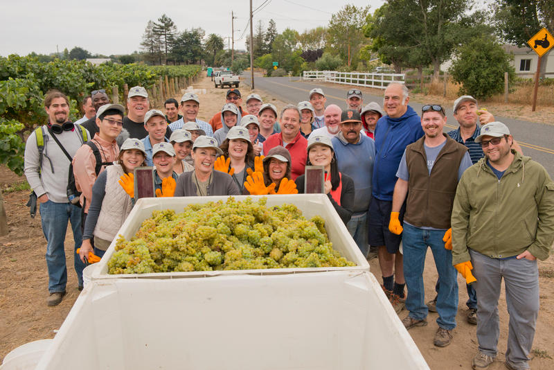 The harvest: 2,000 pounds of chardonnay reserve picked in half an hour. The professionals can pick just as many grapes in a quarter as much time.