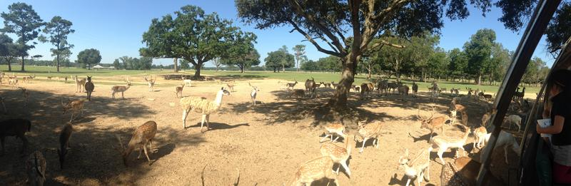 Visitors feed some of the 4,000 antelope, deer, llamas and alpacas.