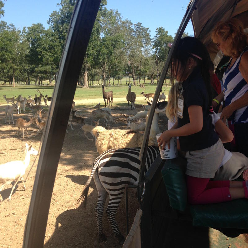 Children visit Global Wildlife on a field trip and learn about zebras and other endangered and threatened species.
