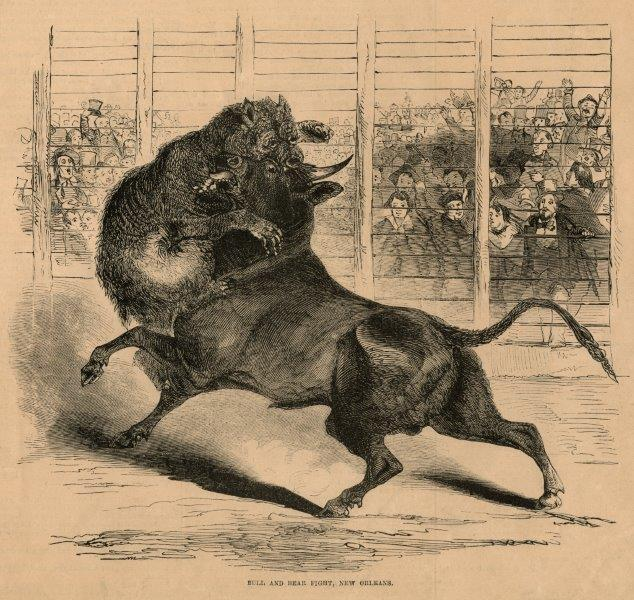 'Bull and Bear Fight - New Orleans'