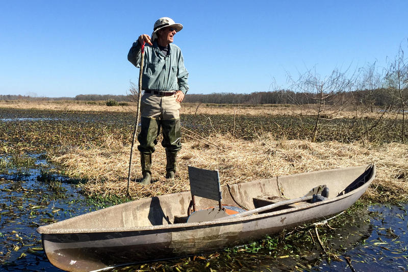 "Albert Poche stands on a ""floating mat"" of vegetation in the Four-Mile Marsh outside of Ponchatoula. The City of Hammond is discharging 3-4 million gallons per day of partially-treated sewage into the marsh."