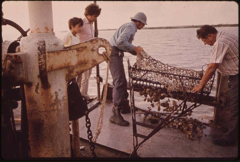 Oystermen at work on Lake Borgne in 1973.