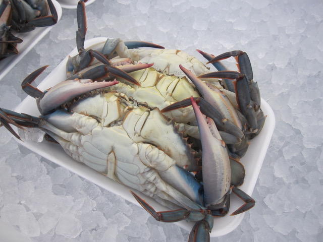 Louisiana soft shell crabs are a prized find at local markets.