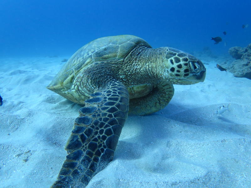 Sea turtles are just one of the many animals the new survey aims to catalogue.