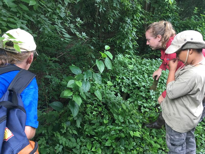Dr. Jennifer Lamb (center) looks for a frog with Claire Cahalan (left) and Sean Augustine (right).
