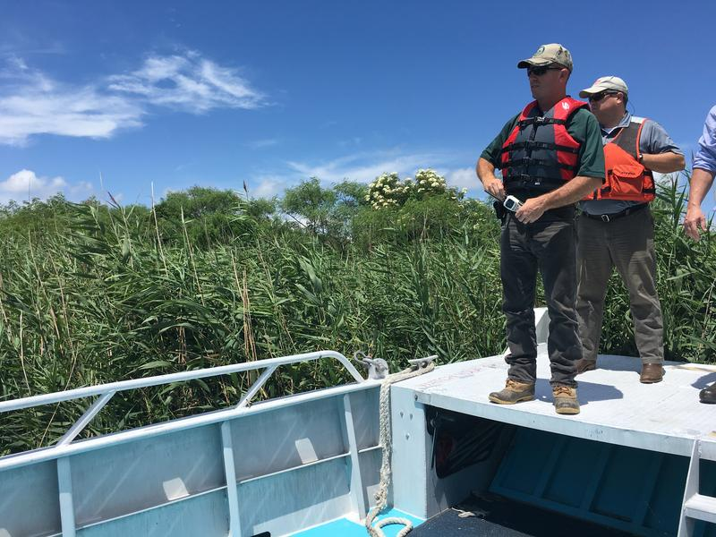 Todd Baker of the Louisiana Department of Wildlife and Fisheries (LDWF) surveys a stand of Roseau cane from the bow of a boat near the mouth of the Mississippi River.