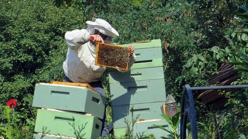 A beekeeper at work.