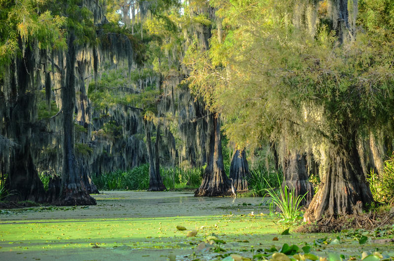 The Louisiana wetlands will serve as one of New Harmony High School's classrooms.