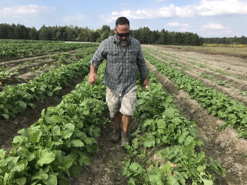 William Fletcher, on his farm in Ponchatoula. His strawberry crop was destroyed in the 2016 floods.