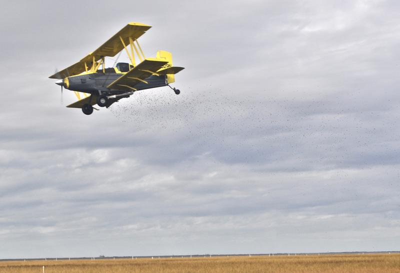 A cropduster dips low to drop a batch of mangrove pods onto the marsh.