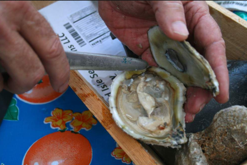 A specially cultivated oyster from the waters around Grand Isle.