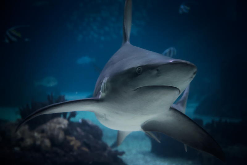 Happy Shark Week! This week on the Coastal News Roundup, we learn that sharks aren't nearly as aggressive as they're commonly made out to be.