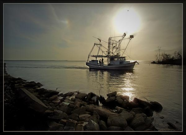 Louisiana shrimpers and fishermen are finding new ways to stay economically viable in the changing landscape of the 21st century.