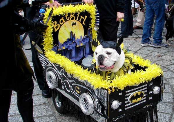 Batgirl at the 2009 Barkus Parade. Send us your great Barkus photos and win tickets from Southern Rep!