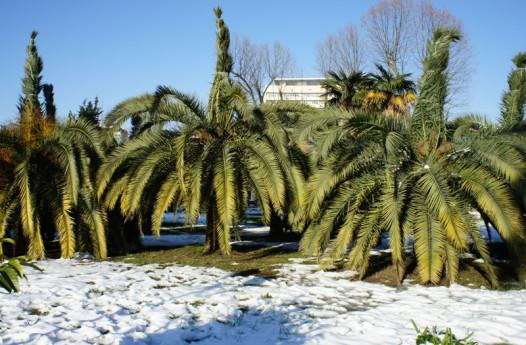 Winter in Sochi: Palm trees and (a tiny bit) of snow