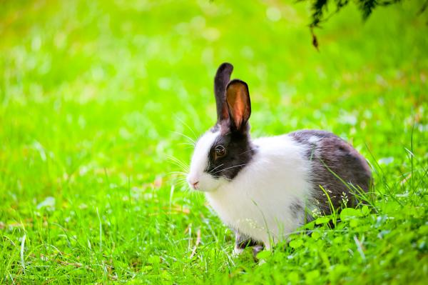 Bounce with me... Animal Life: Hopping Into The World Of Pet Rabbits