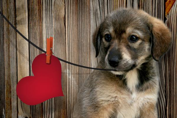 Heartworm disease is most common in dogs, but can also affect cats. Heartworms are difficult and expensive to treat, but easy and affordable to prevent with a monthly pill.