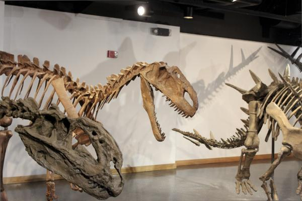 The Lafayette Science Museum, including this dinosaur exhibit and planetarium shows, was free and open to the public on Saturday and Sunday.