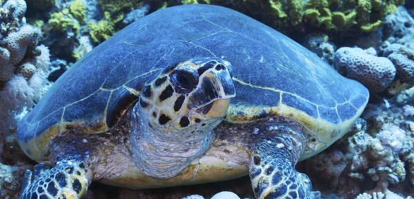 The University of New Orleans has been awarded an 18-month $200,000 grant from the National Fish and Wildlife Foundation to improve a device used aboard shrimp boats intended to protect sea turtles.