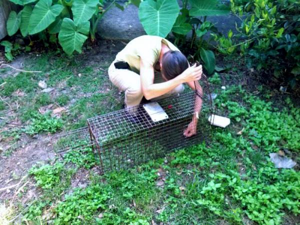 Heather Rigney from the Louisiana SPCA sets a feral cat trap in a back yard.