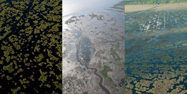 Marsh Degradation