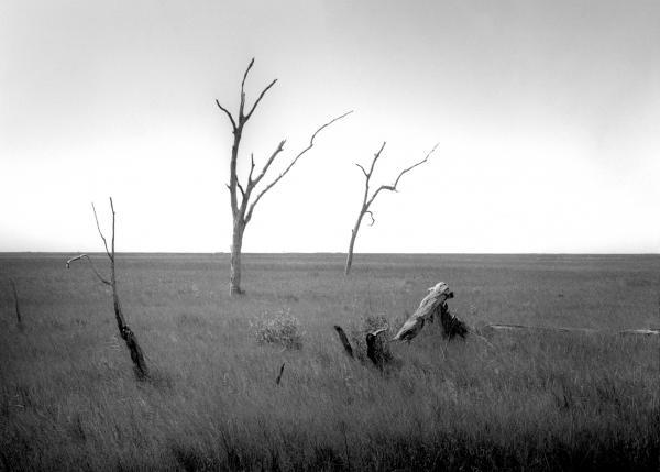 Marshland Bones