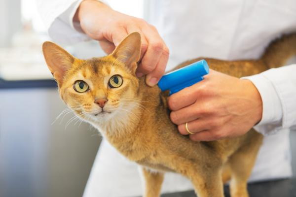 A cat being implanted with a microchip.