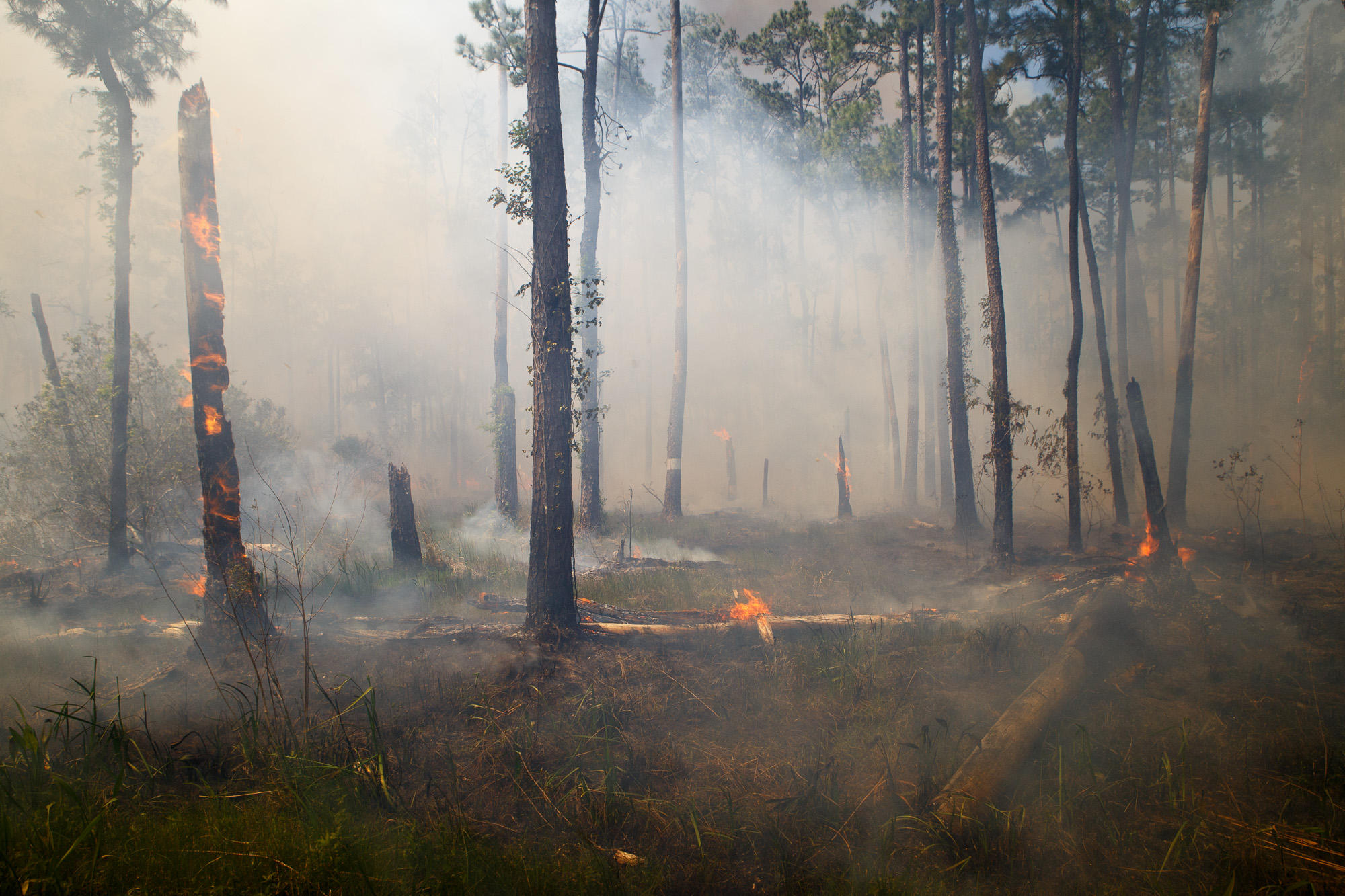 burning forest Geospatial technology and applications center - usda forest service.