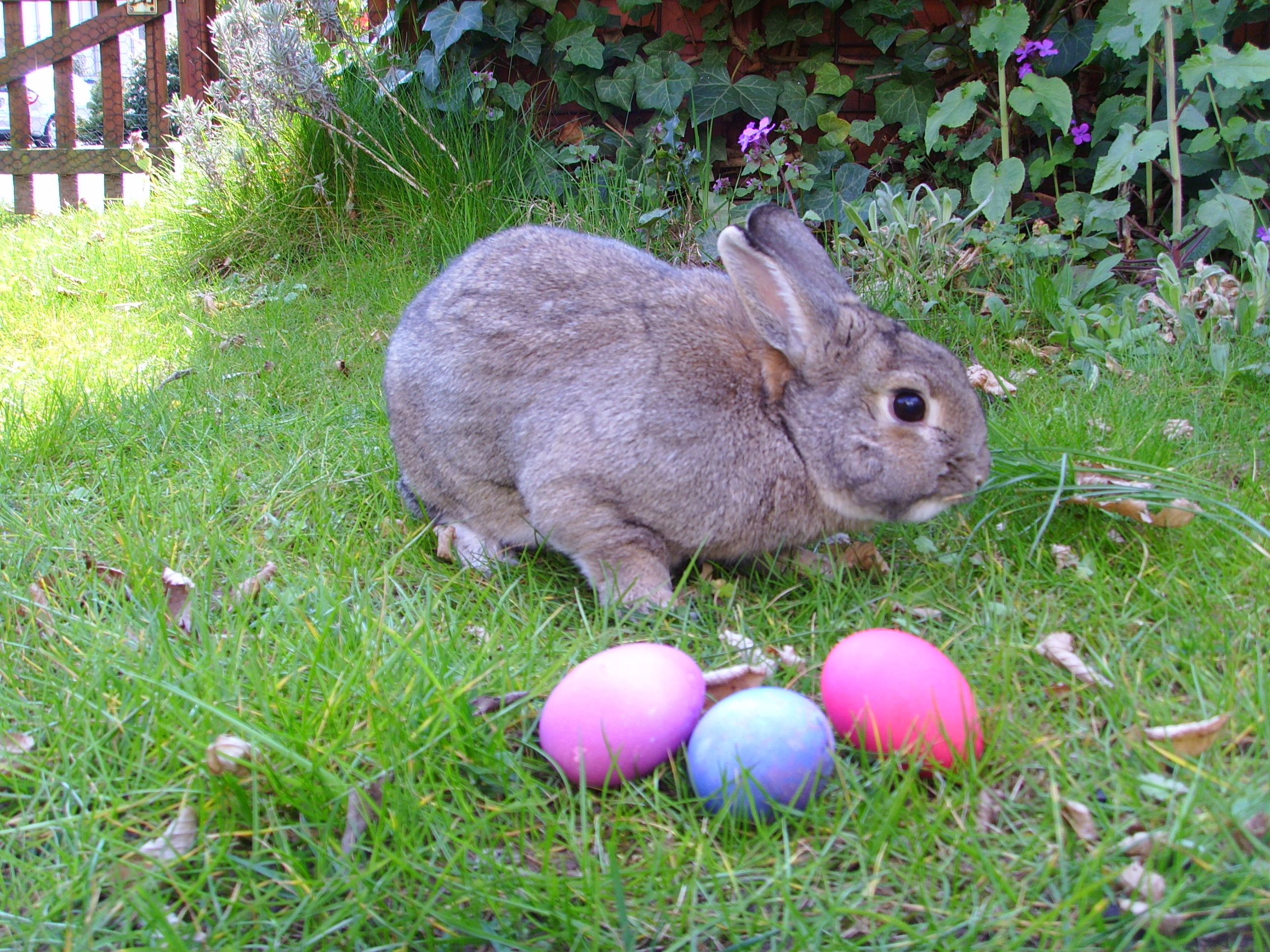 Where Does The Easter Bunny Tradition Come From Photo Album - The ...