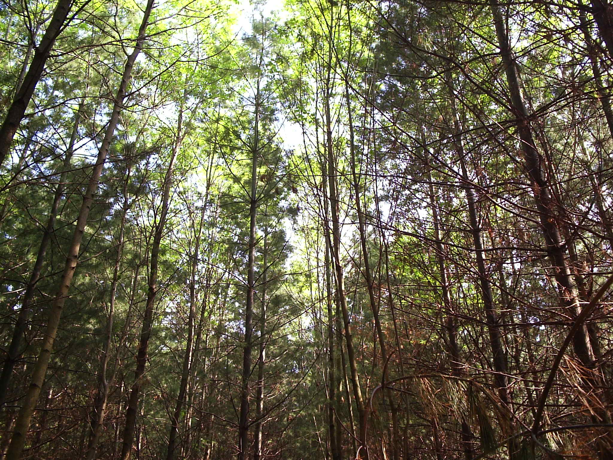 partners in forestry gets conservation award wxpr