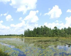 Cranberry bogs are often flooded or put under a sprinkler to keep frost away.
