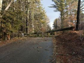 WPS is hoping to improve electricity reliability by getting power lines out of the way of trees.