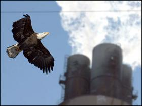 An eagle by the Pulliam Power Plant in Green Bay
