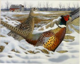 2014 Wisconsin Pheasant Stamp by Caleb Metrich