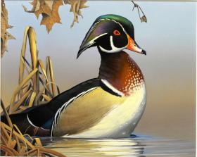 2014 Wisconsin Duck Stamp by Caleb Metrich