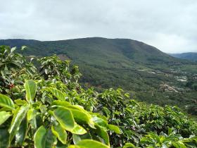 Paul Robbins argues that certain kinds of agriculture like coffee farming can support a diverse ecosystem.