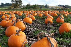 Pumpkin Fest is coming up in Three Lakes.
