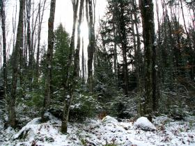 A five dollar permit can get you a holiday tree from the Chequamegon-Nicolet National Forest.
