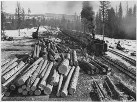 The logging boom.