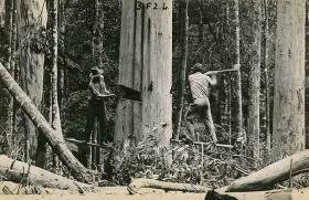 Vintage picture of logging