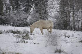 Horses can survive a cold winter, as long as they are kept out of direct wind.