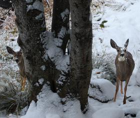 A DNR study will involve twelve forest parcels with different levels of deer and available forage.