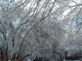 Ice coated trees