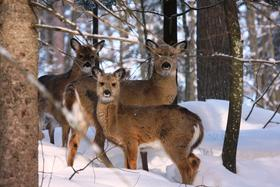 After a tough winter, the state of the deer herd will be one topic of discussion at the DNR's spring hearings.
