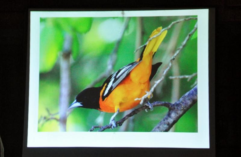Digital image of Laura Erickson's photography displayed on a projection screen. The true clarity and detail of her work can be appreciated in the Photo Checklist section of her website, www.conservationbigyear.com.