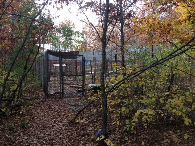 Wild Instincts' spacious bear enclosure can house up to 15 bears.