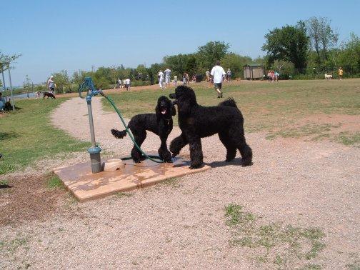 Rhinelander Dog Park Closer To Reality Wxpr