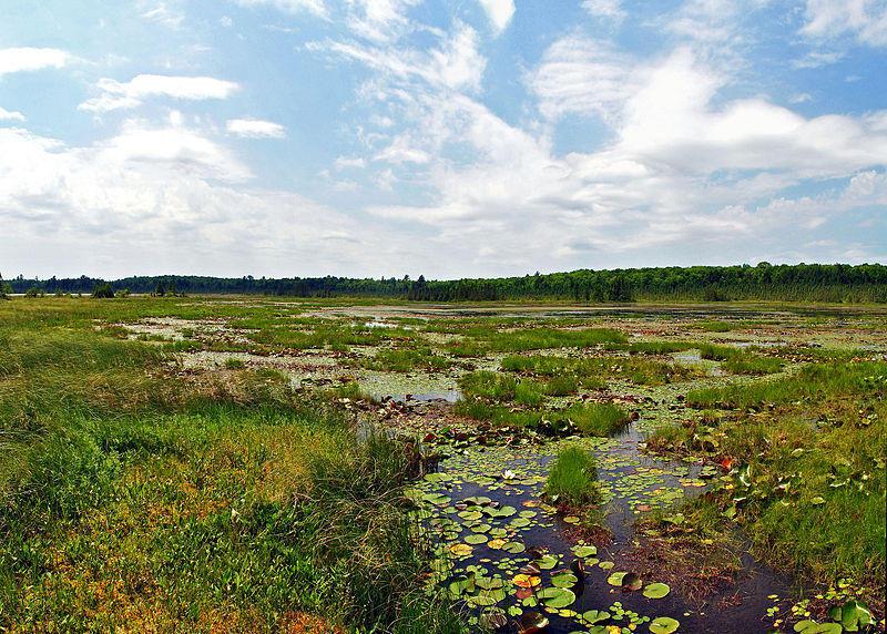 Grandma Lake Wetlands State Natural Area, Florence Co., WI