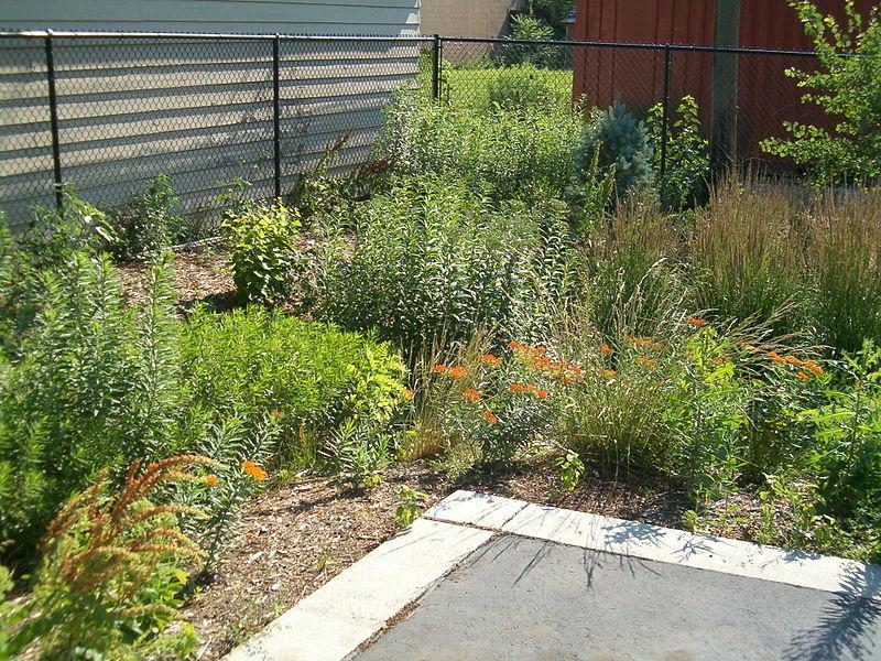 An example of a rain garden.
