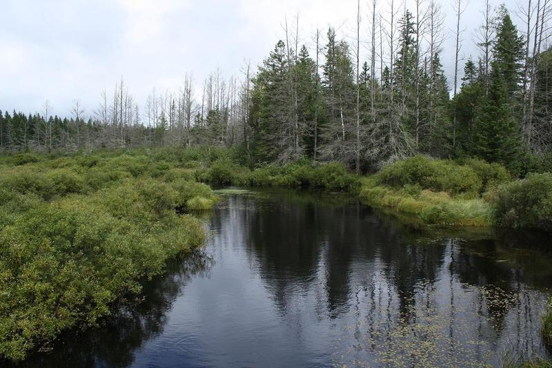 Nicolet National Forest - Headwaters Wilderness